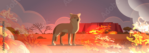 Fototapety, obrazy: dingo escaping from fires in australia animal dying in wildfire bushfire natural disaster concept intense orange flames horizontal vector illustration