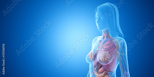 3d rendered medically accurate illustration of the upper body anatomy Canvas Print