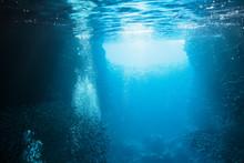 Schools Of Fish Swimming Under...