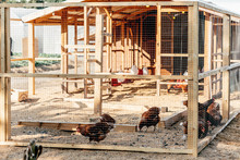 Be Natural. Poultry Farm On A ...