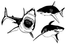 Graphical Set Of Sharks Isolat...
