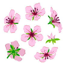 Flower And Bud Pink Azalea Flat Isolated Vector Colorful Illustration