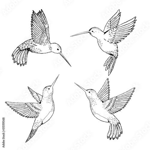 Set hummingbirds. Sketch pencil. Drawing by hand. Tapéta, Fotótapéta