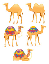 Set Of Cute Two Hump And One Hump Camels With Decorative Saddle Cartoon Animal Design Flat Vector Illustration Isolated On White Background
