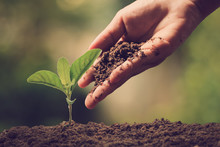 Hands Of Farmer Growing And Nurturing Tree Growing On Fertile Soil With Green And Yellow Bokeh Background / Nurturing Baby Plant