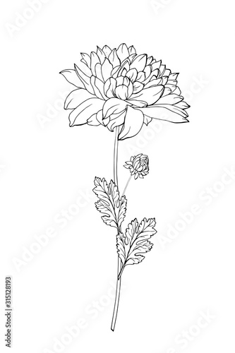 Fotomural One black outline flower chrysanthemum, branch and leaves