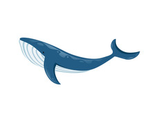Big Blue Whale Cartoon Animal Design Biggest Mammal On The Earth Flat Vector Illustration Isolated On White Background