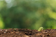 Agriculture. Growing plants. Plant seedling