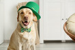 Cute dog with green hat at home. St. Patrick's Day celebration