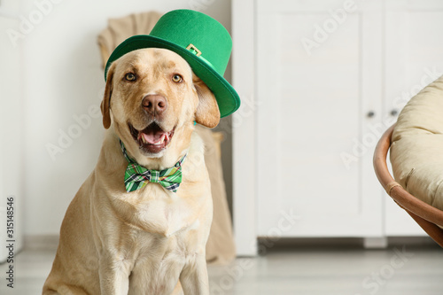 Fototapeta Cute dog with green hat at home. St. Patrick's Day celebration obraz