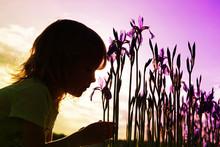 A Little Girl Sniffs Purple Iris Flowers. Beautiful Sunset Sky.