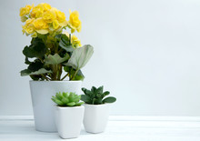 Household Flowers, Yellow Bloo...