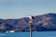 Pier 39 San Francisco Residents