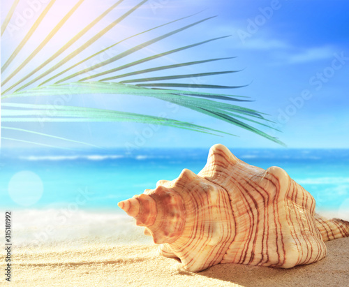 Valokuva Summer beach with seashell in white sand and tropical palm leaf.