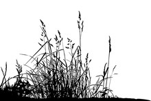 Natural Grass Silhouettes On A White Background (Vector Illustration).Eps10