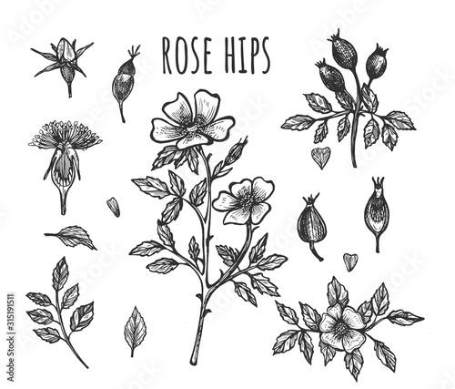 Cuadros en Lienzo  Fresh wild rose hip botanical set