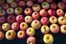 Apples In Black Tub Of Water