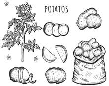 Organic Raw Vegan Healthy Food