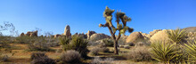 Joshua Tree National Park, Spr...