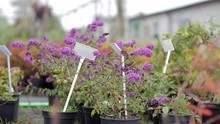Closeup Gardening Plants For S...