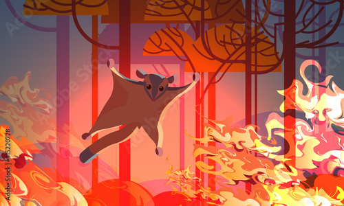Fototapety, obrazy: sugar glider escaping from fires in australia animals dying in wildfire bushfire natural disaster concept intense orange flames horizontal vector illustration