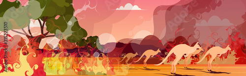 Fotografía  kangaroo running from forest fires in australia animals dying in wildfire bushfi