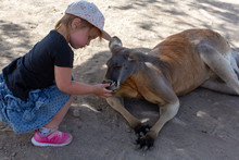Baby Feeds Australian Kangaroo
