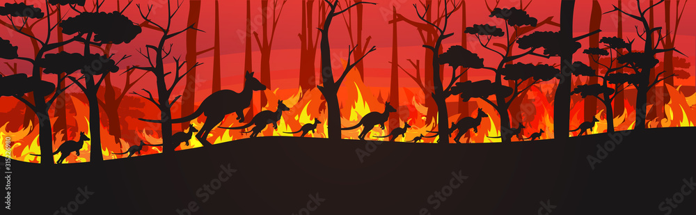 Fototapeta silhouettes of kangaroos running from forest fires in australia animals dying in wildfire bushfire burning trees natural disaster concept intense orange flames horizontal vector illustration