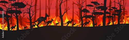 Fototapeta silhouettes of kangaroos running from forest fires in australia animals dying in wildfire bushfire burning trees natural disaster concept intense orange flames horizontal vector illustration obraz