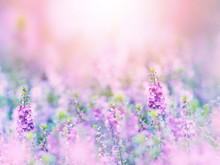 Abstract Floral Backdrop Of Purple Flowers Field With Soft Style.