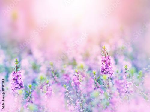streszczenie-tlo-kwiatowy-fioletu