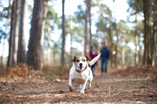 Happy, Carefree Dog Running In...