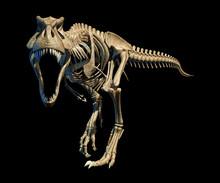 Tyrannosaurus Rex Skeleton, Il...