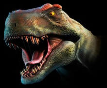 Tyrannosaurus Rex Head Study