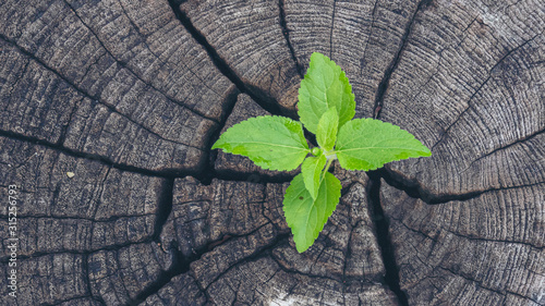 Photo Green tree leaf on rotten wood stump wall Green leaves of palm tree fresh plant texture in natural tropical garden