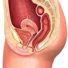 Female Reproductive System, Il...