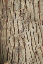 Seamless Tree Bark Texture. Tree Bark Texture Background