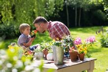 Son Holding Plant