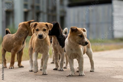 street puppies Fototapet