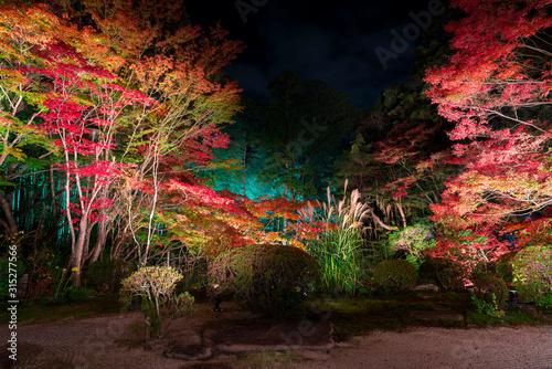 Fotografia 京都 南禅寺の塔頭寺院 天授庵(てんじゅあん)の紅葉 夜景