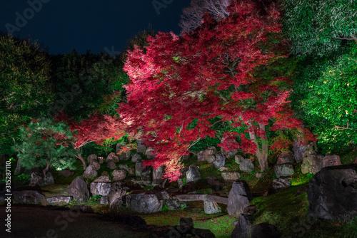 京都 高台寺の塔頭寺院 圓徳院(えんとくいん)の紅葉 夜景 Wallpaper Mural