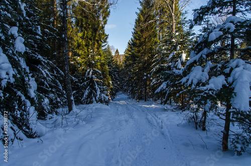 Obraz oświetlony las zimą bieszczady - fototapety do salonu