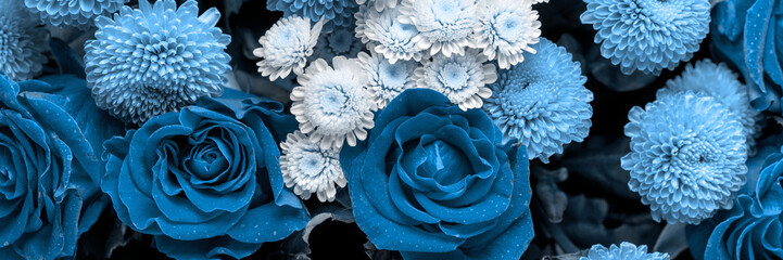 Bouquet of roses and chrysanthemums close up. Beautiful flower background. Blue floral backdrop. Panoramic banner.