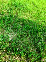 Green grass texture background for work