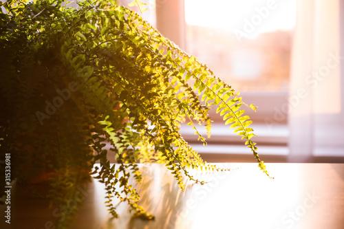 Fotografía  Fern plant on table at home, closeup