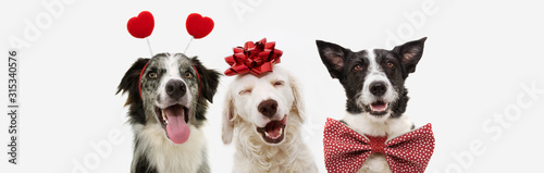banner three dogs celebrating valentine's day with a red ribbon on head and a heart shape diadem and bowtie. isolated against white background.