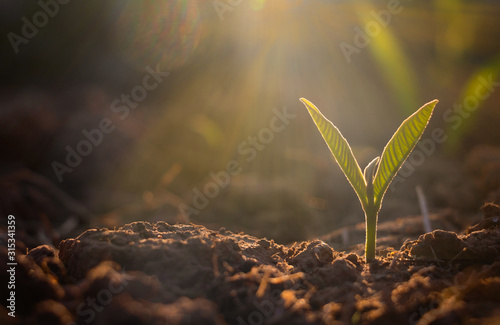 Photo Growing plant,Young plant in the morning light on ground background, New life concept