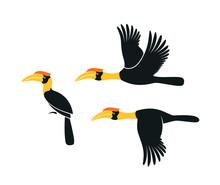 Hornbill Logo. Kalao. Isolated Hornbill On White Background