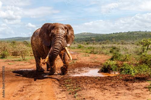 byk-slon-w-rezerwacie-zimanga