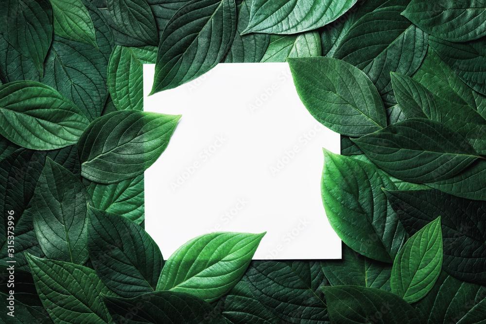 Fototapeta Paper card in green leaves pattern. Beautiful nature background.